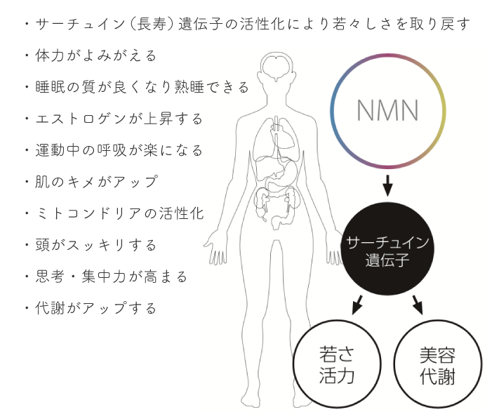 NMN点滴の効果